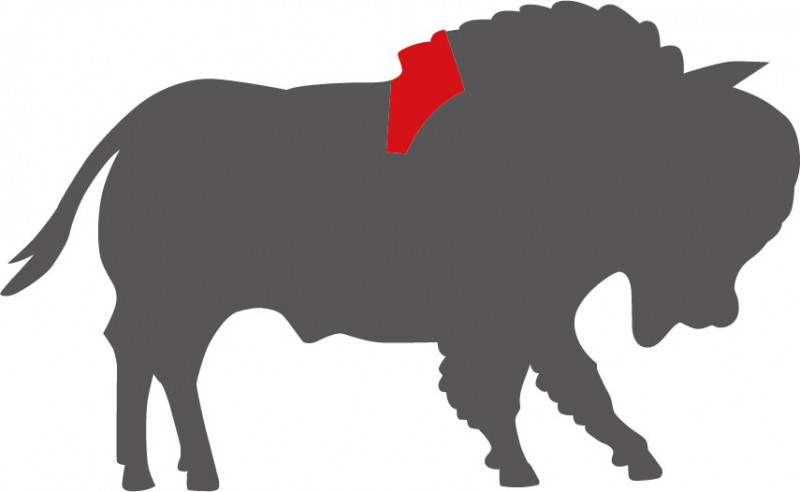 Wo liegt das Ribeye beim Bison?