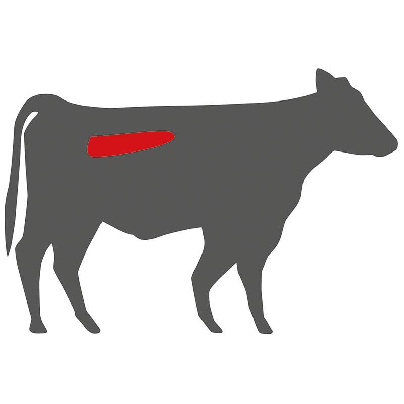 Wo liegt das Filet beim Hereford Rind?