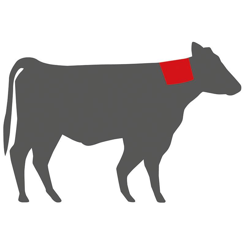 Wo liegt das Western Steak beim Rind?