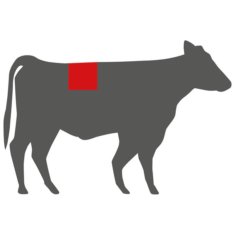 Wo liegt das T-Bone beim Rind?