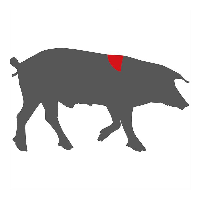 Wo liegt das Pluma beim Schwein?