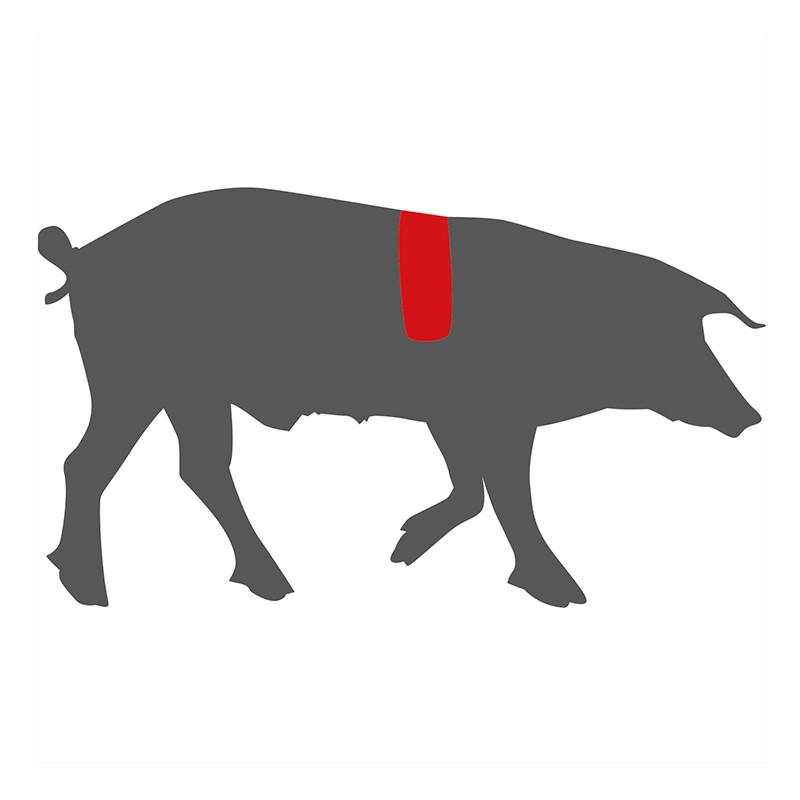 Wo liegt das Sectro beim Schwein?