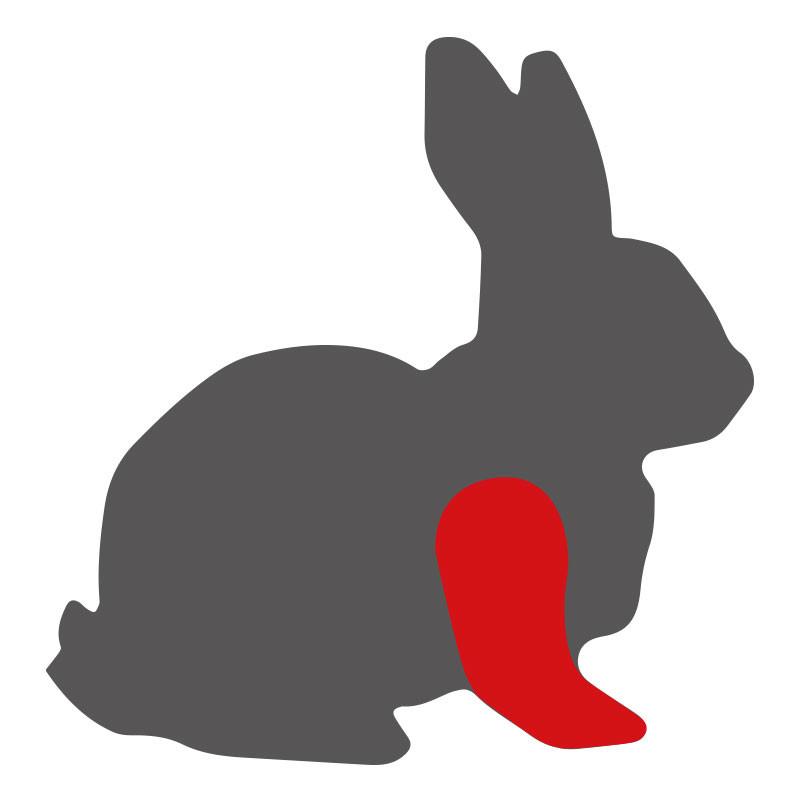 Wo liegen die Kaninchenvorderläufe?