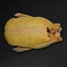 Miéral Excellence Barbarie Ente, küchenfertig