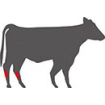 Shank Meat
